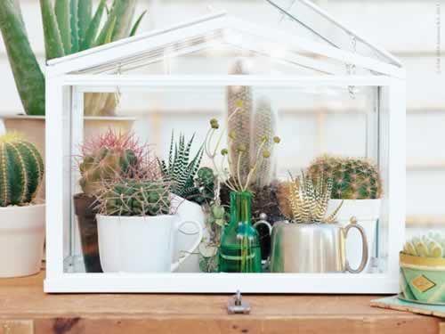 invernadero-adoraideas-cactus-tazas