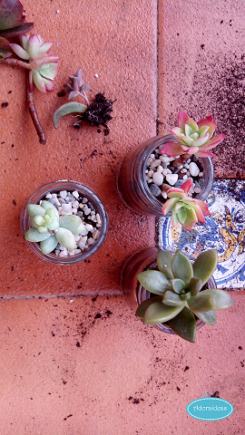 suculentas-cactus-reciclaje-terrario-adoraideas-5
