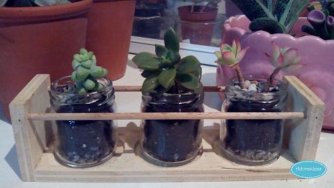 suculentas-cactus-reciclaje-terrario-adoraideas-6